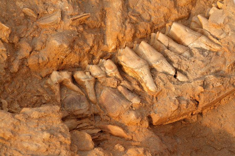 Η οδοντική πλάκα αποκαλύπτει τις διατροφικές συνήθειες των πρώιμων ανθρώπων